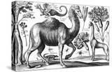 Animalium  Ferarum Et Bestiarum  Engraved by David Loggan  1663 (Engraving)