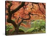 Japanese Maple  Portland Japanese Garden  Oregon  USA