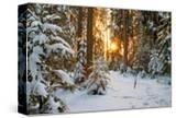 Beautiful Winter Landscape with Sunset in the Forest
