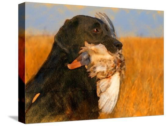 yarvet-oil-painting-portrait-of-black-labrador-with-duck