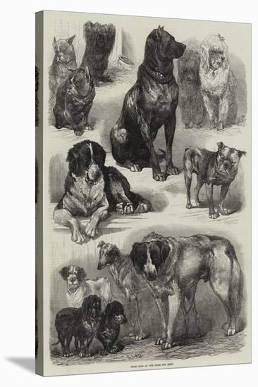 Prize Dogs at the Paris Dog Show-Auguste Andre Lancon-Premier Image Canvas