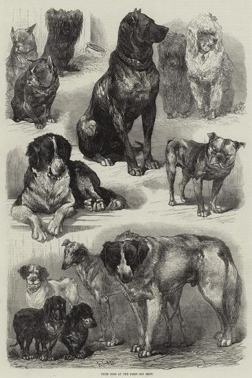 Prize Dogs at the Paris Dog Show-Auguste Andre Lancon-Stretched Canvas Print