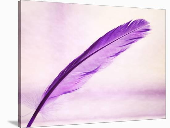 Purple Feather--Stretched Canvas Print