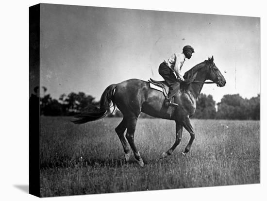 Race Horse Man O' War--Stretched Canvas Print