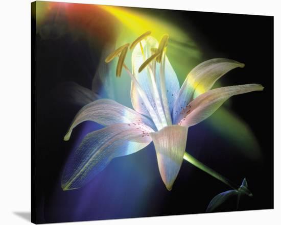 Rainbow Lily-Scott Peck-Stretched Canvas Print