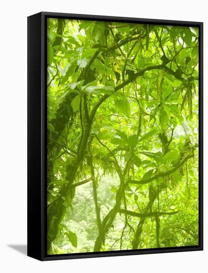 Rainforest Habitat at Trafalgar Falls, Morne Trois Pitons National Park, UNESCO World Heritage Site-Kim Walker-Framed Canvas Print
