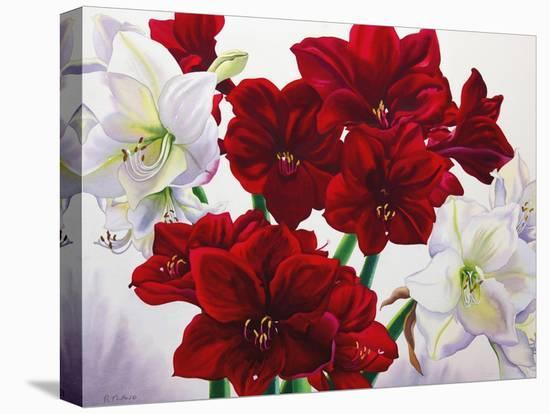 Red and White Amaryllis, 2008-Christopher Ryland-Stretched Canvas Print