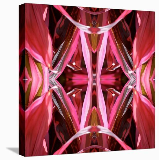 Red Blanket 2X-Rose Anne Colavito-Stretched Canvas Print