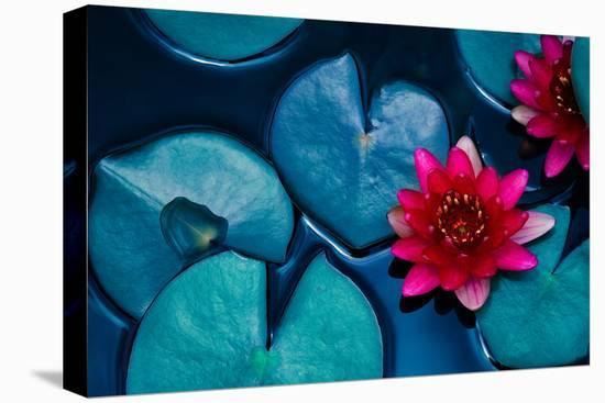 Red Lotus Water Lily Blooming on Water Surface and Dark Blue Leaves Toned, Purity Nature Background--Stretched Canvas Print