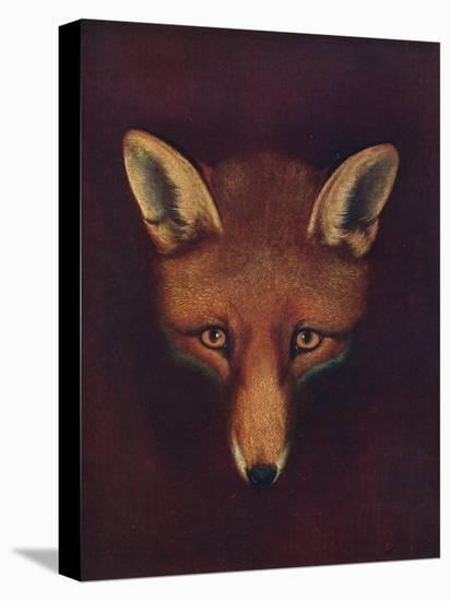 'Renard the Fox', c1800, (1922)-Philip Reinagle-Stretched Canvas Print