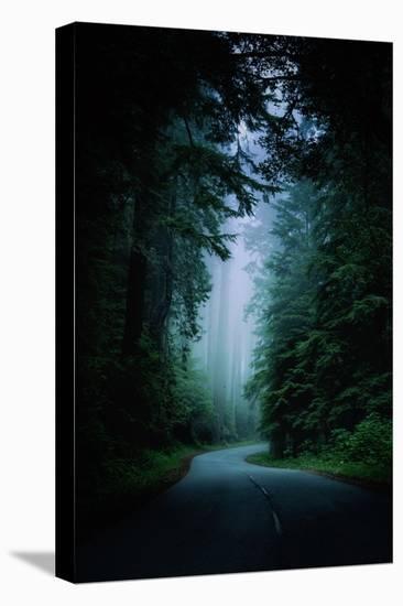 Road Light Redwood Forest California Coast Mystical Mist-Vincent James-Stretched Canvas Print