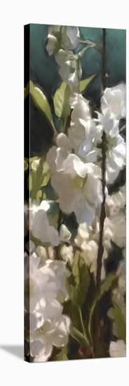 Roses 05-Rick Novak-Stretched Canvas Print