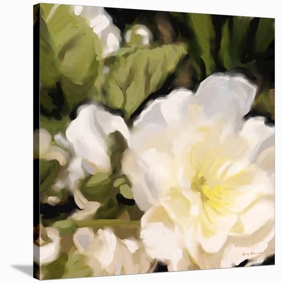 Roses 11-Rick Novak-Stretched Canvas Print