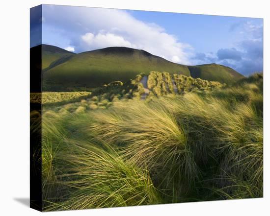 Ross Behy Sand Dunes, Ireland III-Richard Desmarais-Stretched Canvas Print