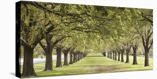 Rows of trees bordering greensward (detail)--Stretched Canvas Print