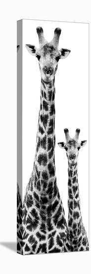 Safari Profile Collection - Giraffe and Baby White Edition IV-Philippe Hugonnard-Stretched Canvas Print