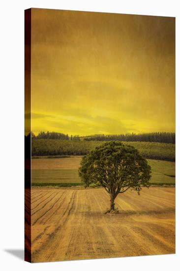 Schwartz - Lone Tree at Sunset-Don Schwartz-Stretched Canvas Print