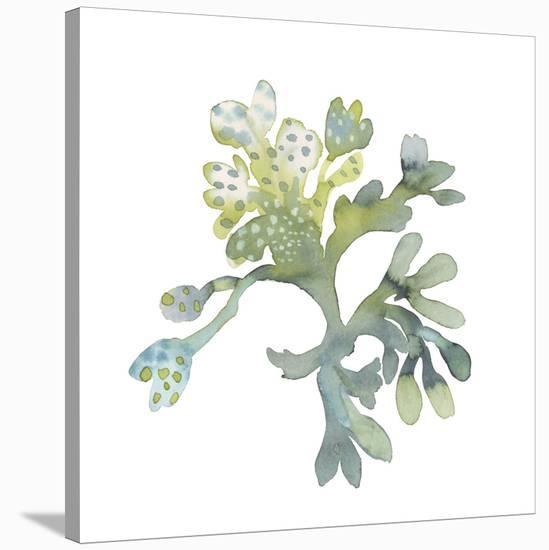 Sea Tangle II-Sandra Jacobs-Stretched Canvas Print