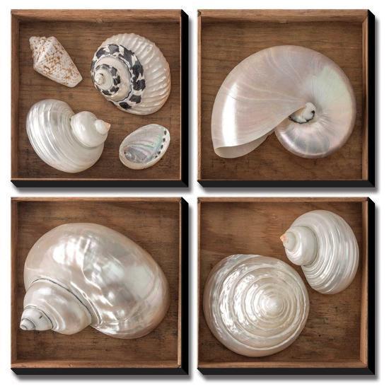Seashells Treasures I-Assaf Frank-Canvas Art Set