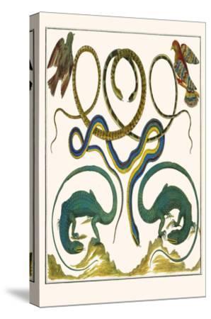 Serpents Lizards And Birds Art Print Albertus Seba Art Com