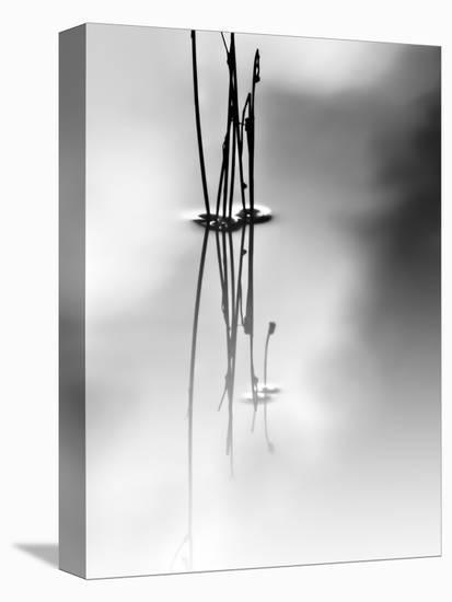 Silence-Ursula Abresch-Stretched Canvas Print