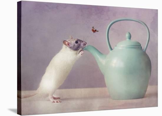 Snoozy :)-Ellen Van Deelen-Stretched Canvas