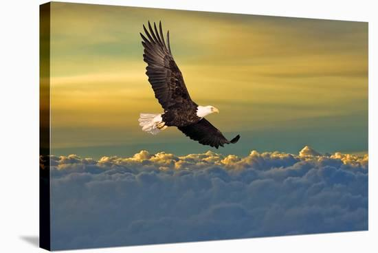 Soarin'--Stretched Canvas Print