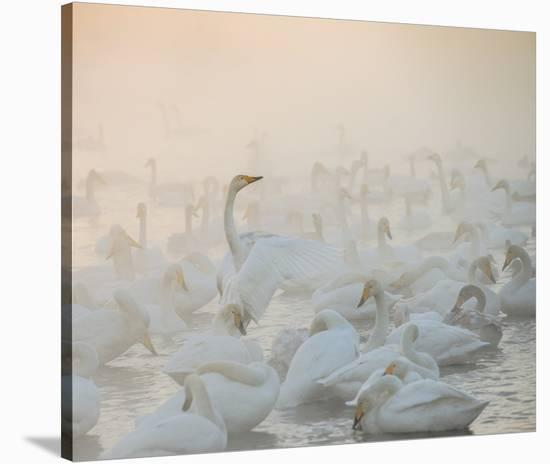 Song Of The Morning Light-Dmitry Dubikovskiy-Stretched Canvas Print