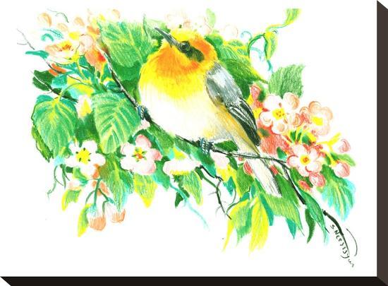 Songbird, Warbler-Suren Nersisyan-Stretched Canvas Print