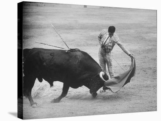 """Spanish Matador Antonio Ordonez Executing Left Handed Pass Called """"Pase Natural"""" During Bullfight-Loomis Dean-Stretched Canvas Print"""
