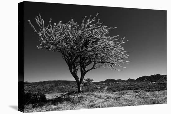 Spiny Tree-Nish Nalbandian-Stretched Canvas Print