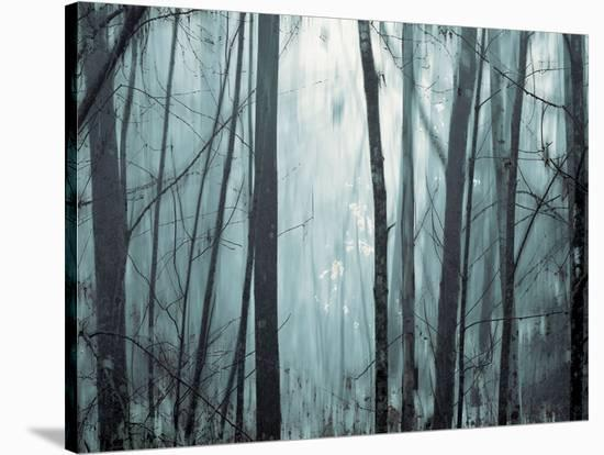 Spring Mist I-Marvin Pelkey-Stretched Canvas Print