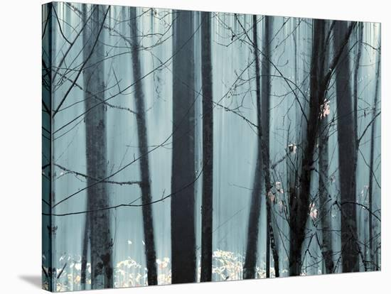 Spring Mist II-Marvin Pelkey-Stretched Canvas Print