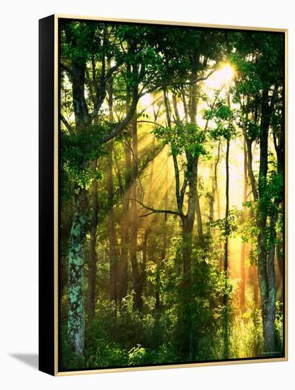 Sunbeams Through the Trees--Framed Canvas Print