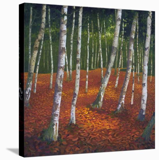 Sunshshine & Shadow I--Stretched Canvas Print