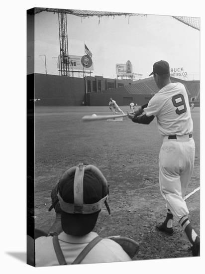 Ted Williams Batting at Fenway Park-Ralph Morse-Stretched Canvas Print