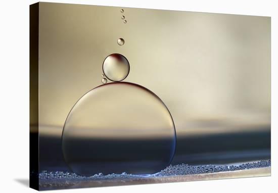 The Stragglers-Heidi Westum-Stretched Canvas Print