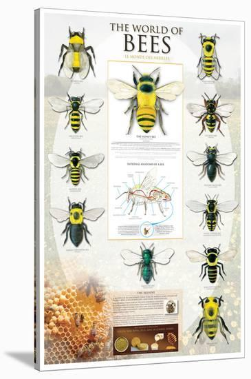 The World Of Bees--Stretched Canvas Print