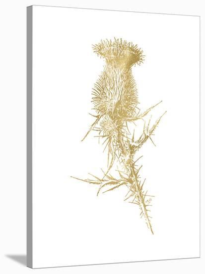Thistle 1 Golden White-Amy Brinkman-Stretched Canvas Print