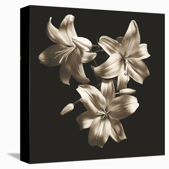 Three Lilies-Michael Harrison-Stretched Canvas Print