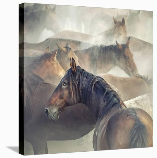 Tired Horses-Huseyin Ta?k?n-Stretched Canvas Print