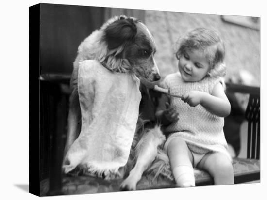 Toddler Trying to Brush Dog's Teeth--Stretched Canvas Print