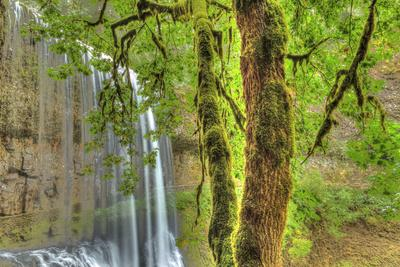 Trail of Ten Falls, Silver Falls State Park, near Silverton, Oregon-Stuart Westmorland-Stretched Canvas Print