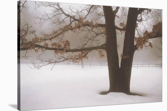 Tranquility-David Lorenz Winston-Stretched Canvas