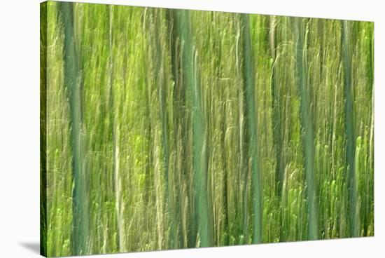 Tree Abstraction III-Mike Grandmaison-Stretched Canvas Print