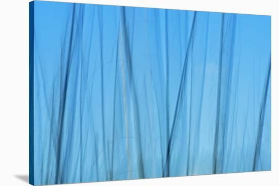 Tree Abstraction IV-Mike Grandmaison-Stretched Canvas Print