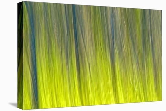 Tree Abstraction VI-Mike Grandmaison-Stretched Canvas Print