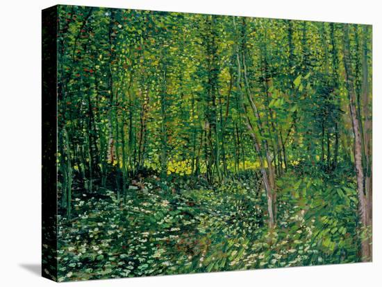 Trees and Undergrowth, c.1887-Vincent van Gogh-Stretched Canvas Print