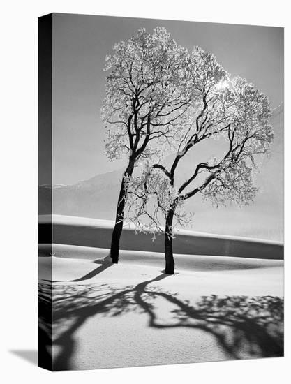 Trees in the Snow-Alfred Eisenstaedt-Stretched Canvas Print