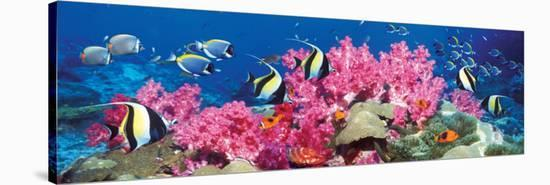 Tropical Fish--Stretched Canvas Print
